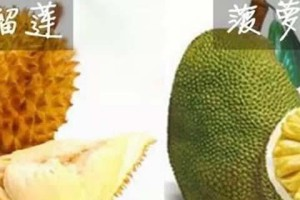 榴莲和菠萝的差别,榴莲a果和b果的差别